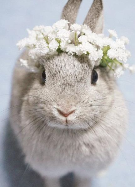 bunny-memes-and-photos-that-will-warm-your-heart-2