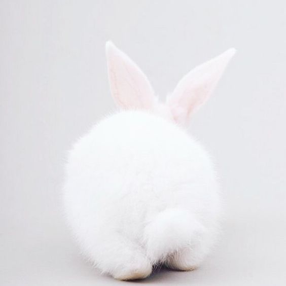 bunny-memes-and-photos-that-will-warm-your-heart-20
