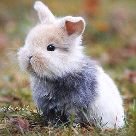 bunny-memes-and-photos-that-will-warm-your-heart-21
