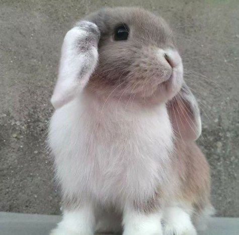 bunny-memes-and-photos-that-will-warm-your-heart-22