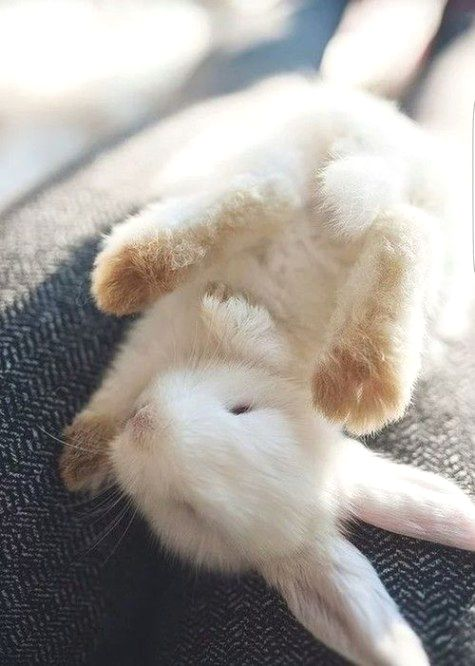 bunny-memes-and-photos-that-will-warm-your-heart-24