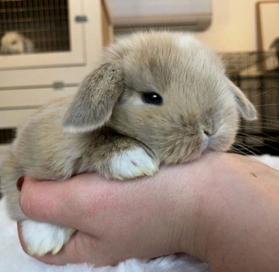 bunny-memes-and-photos-that-will-warm-your-heart-4