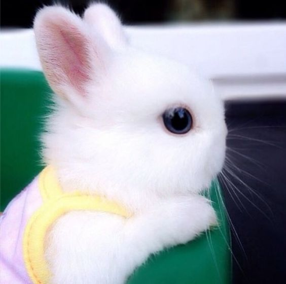 bunny-memes-and-photos-that-will-warm-your-heart-5