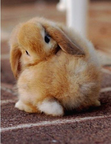 bunny-memes-and-photos-that-will-warm-your-heart-7