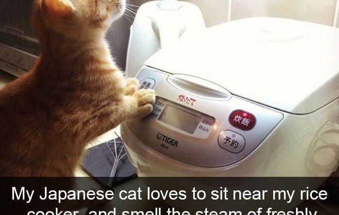 funny-cat-snapchats-1119838040070437086