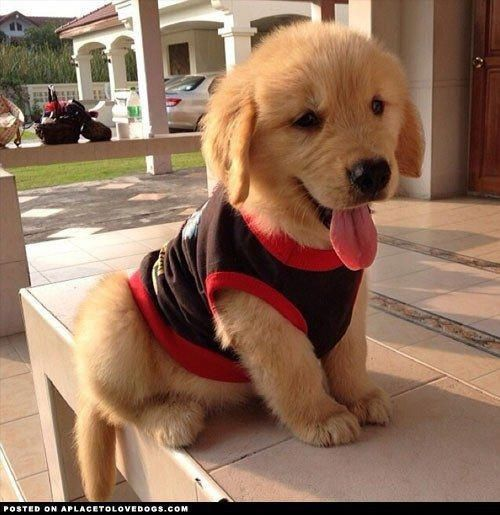 puppies-with-the-best-smiles-on-the-internet-19