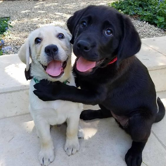puppies-with-the-best-smiles-on-the-internet-5