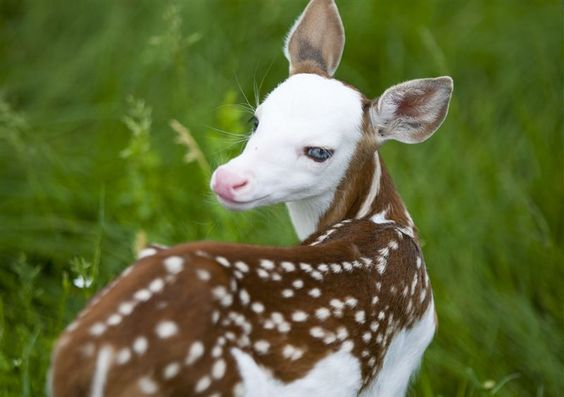 teeny-baby-animals-you-you-will-love-13
