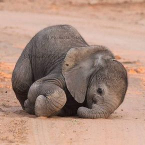 teeny-baby-animals-you-you-will-love-18