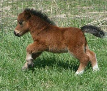 teeny-baby-animals-you-you-will-love-19
