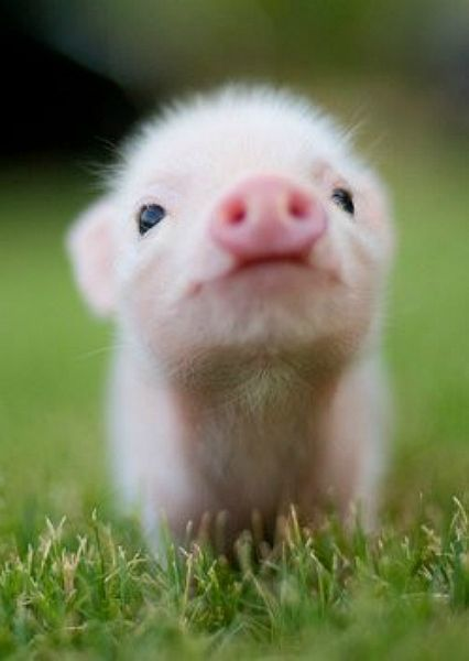 teeny-baby-animals-you-you-will-love-2