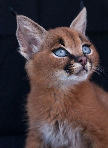 teeny-baby-animals-you-you-will-love-25