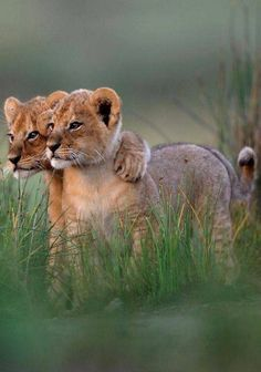 teeny-baby-animals-you-you-will-love-28