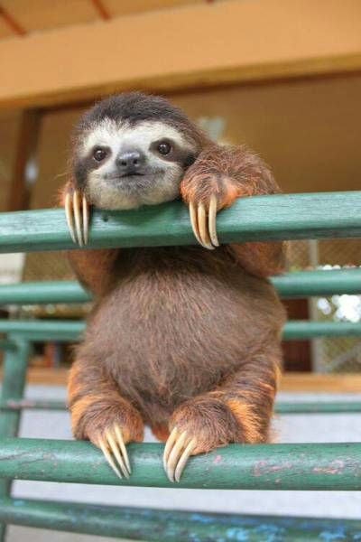 teeny-baby-animals-you-you-will-love-3