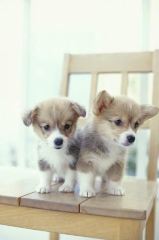 teeny-baby-animals-you-you-will-love-31