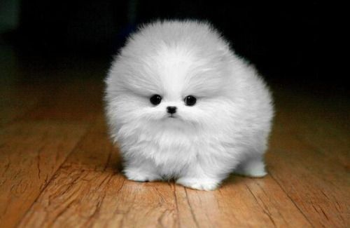 teeny-baby-animals-you-you-will-love-39