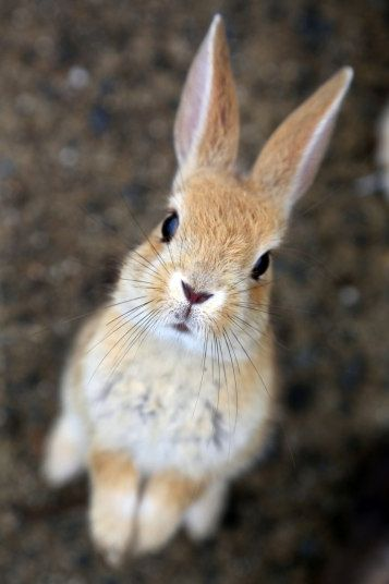 teeny-baby-animals-you-you-will-love-4