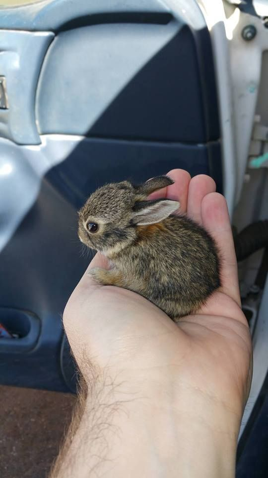 teeny-baby-animals-you-you-will-love-41