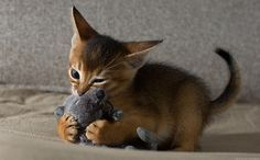 teeny-baby-animals-you-you-will-love-45