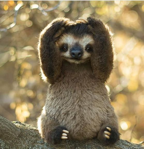 teeny-baby-animals-you-you-will-love-47