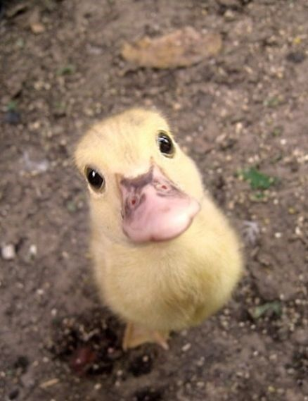 teeny-baby-animals-you-you-will-love-51