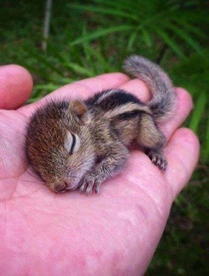 teeny-baby-animals-you-you-will-love-53