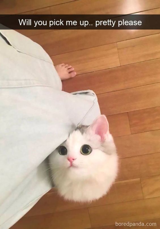 teeny-baby-animals-you-you-will-love-54