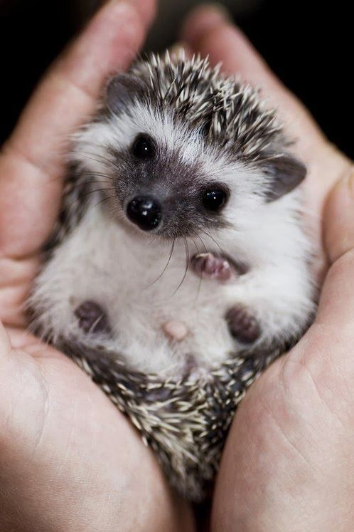 teeny-baby-animals-you-you-will-love-56