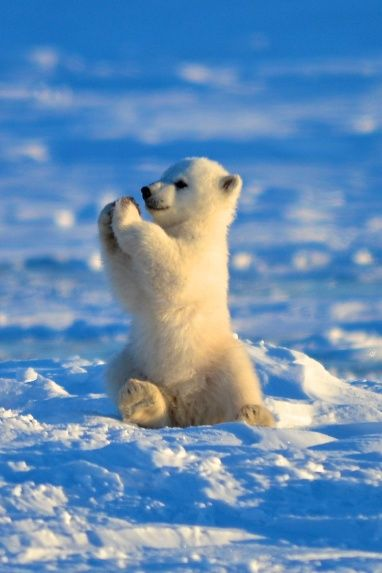 teeny-baby-animals-you-you-will-love-57
