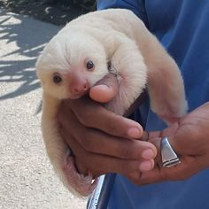 teeny-baby-animals-you-you-will-love-6