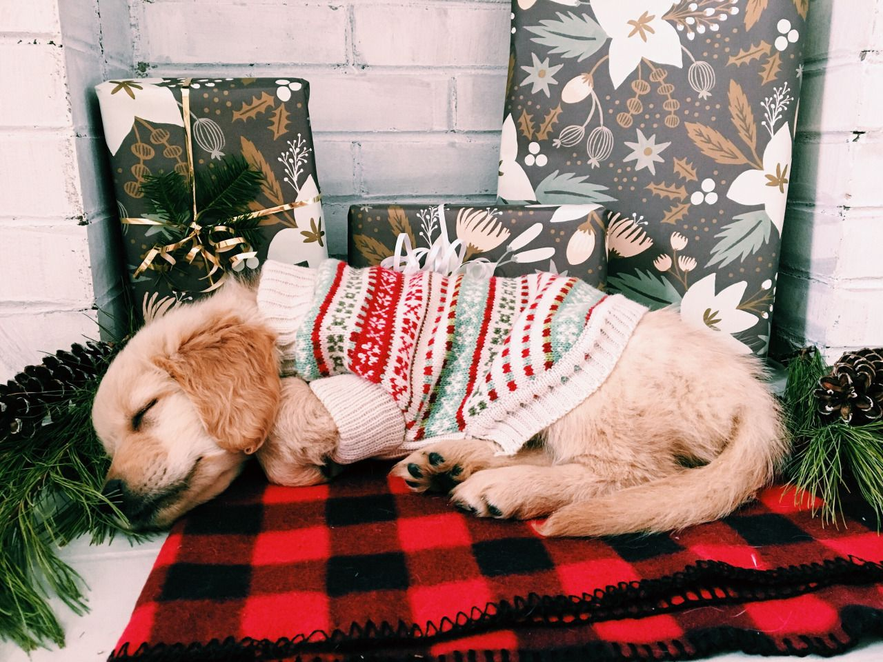 The Cutest Christmas Puppies