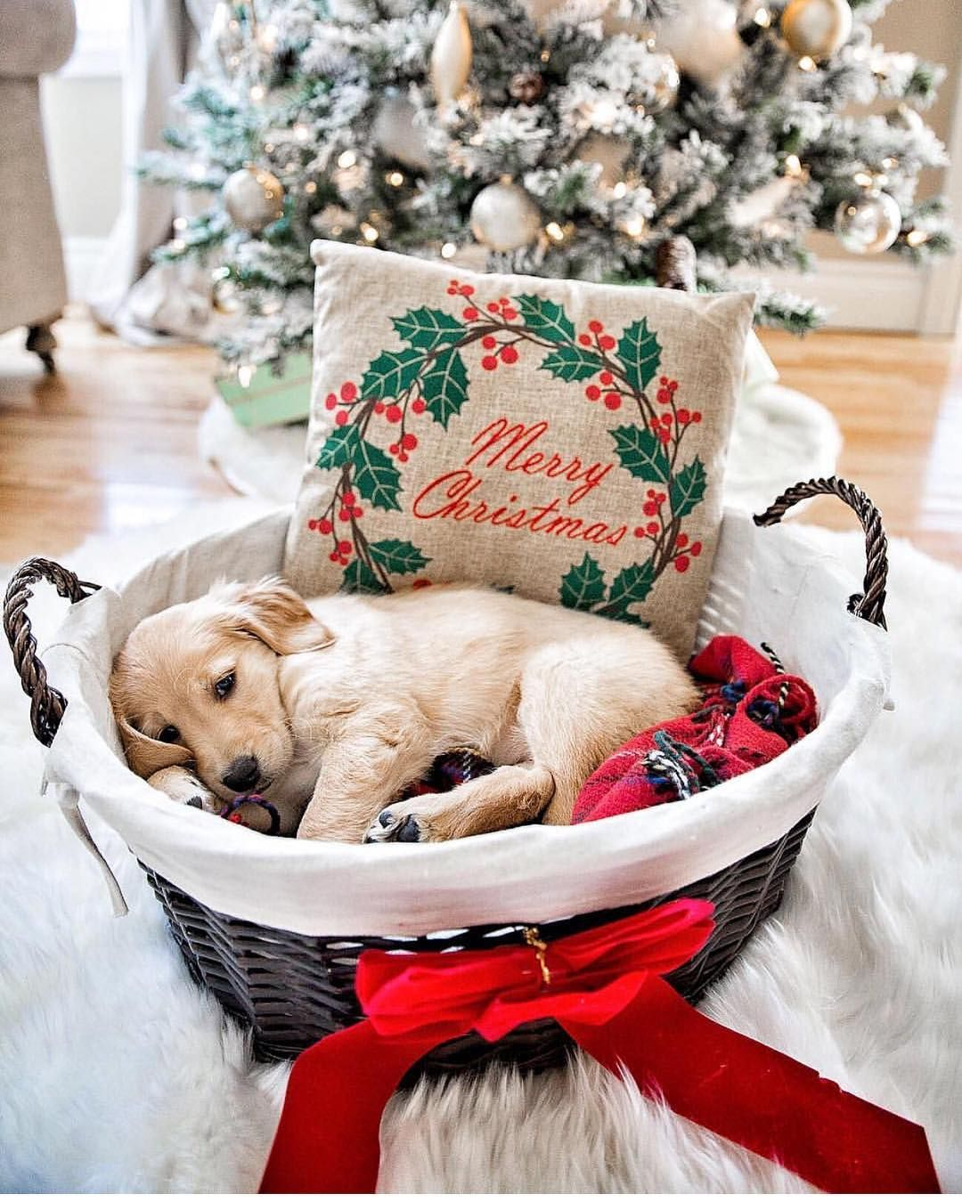 42 Of The Cutest Christmas Puppies Fallinpets