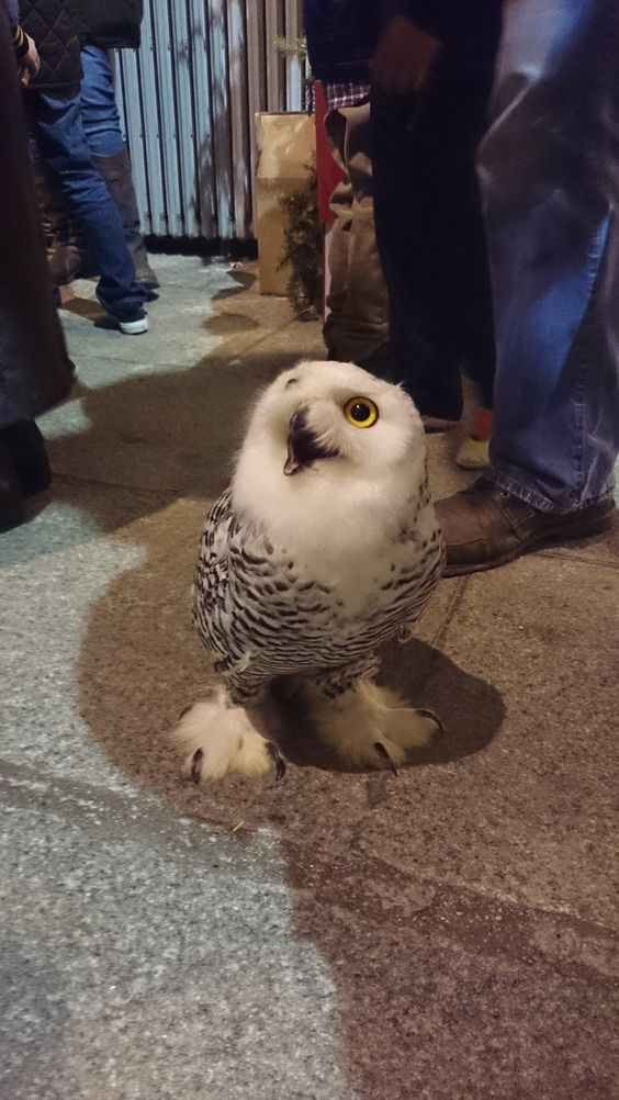 the-cutest-owls-to-ever-owl-1