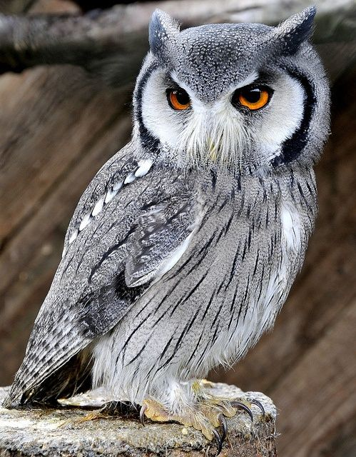 the-cutest-owls-to-ever-owl-14