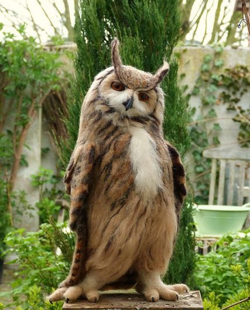 the-cutest-owls-to-ever-owl-15