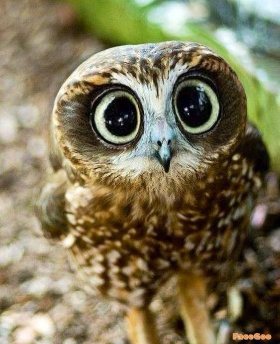 the-cutest-owls-to-ever-owl-16