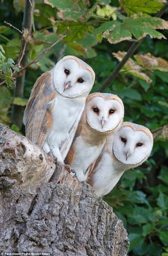the-cutest-owls-to-ever-owl-19