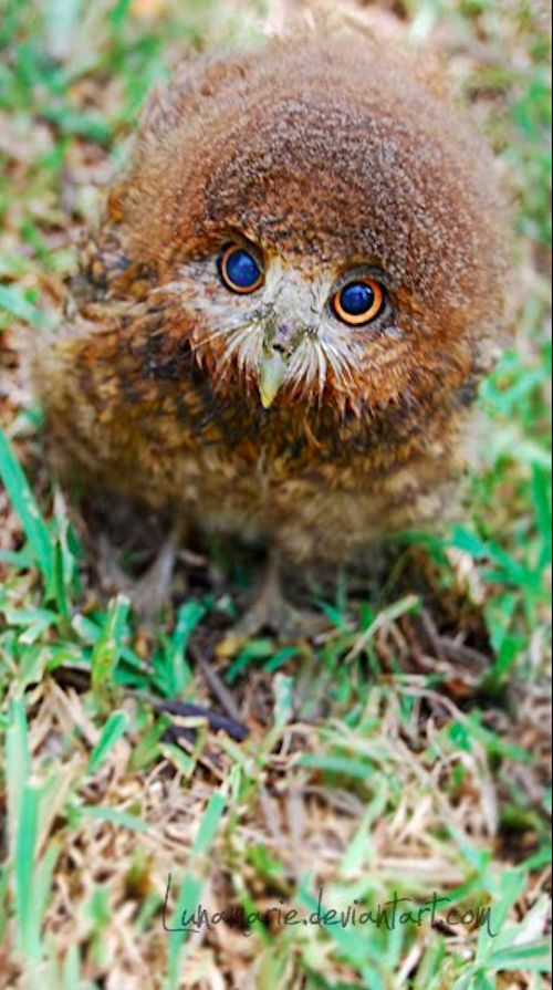 the-cutest-owls-to-ever-owl-2