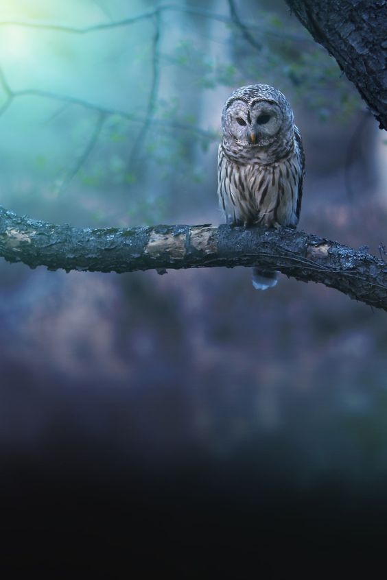 the-cutest-owls-to-ever-owl-4
