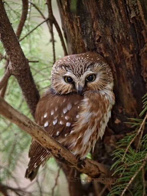 the-cutest-owls-to-ever-owl-7