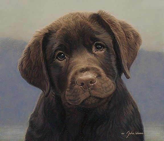 cute-labrador-puppies-that-will-melt-your-heart-16