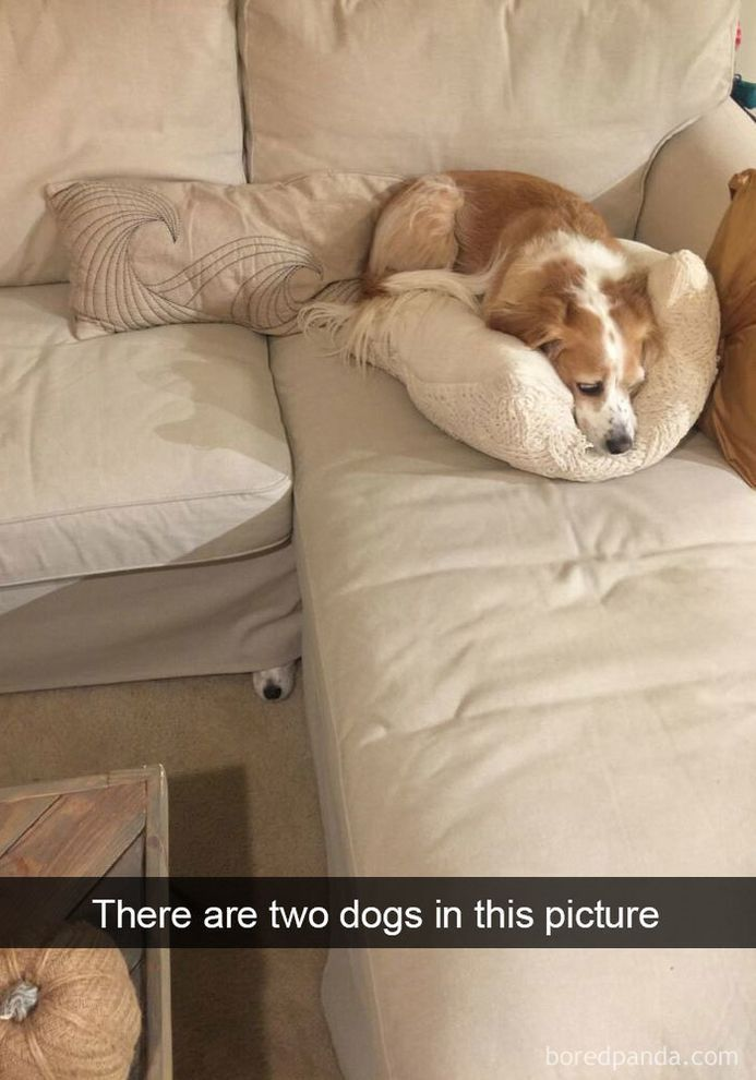 funny-dog-snapchats-that-you-need-to-see-right-now-10