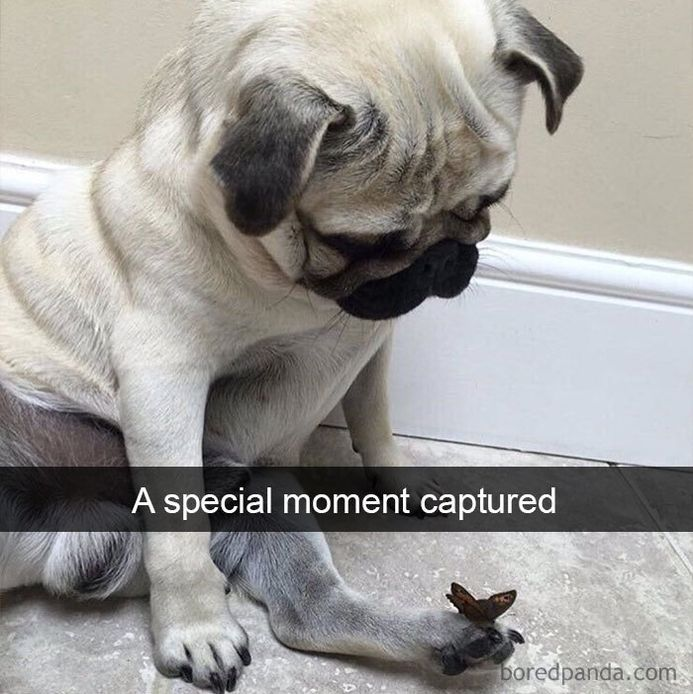funny-dog-snapchats-that-you-need-to-see-right-now-15