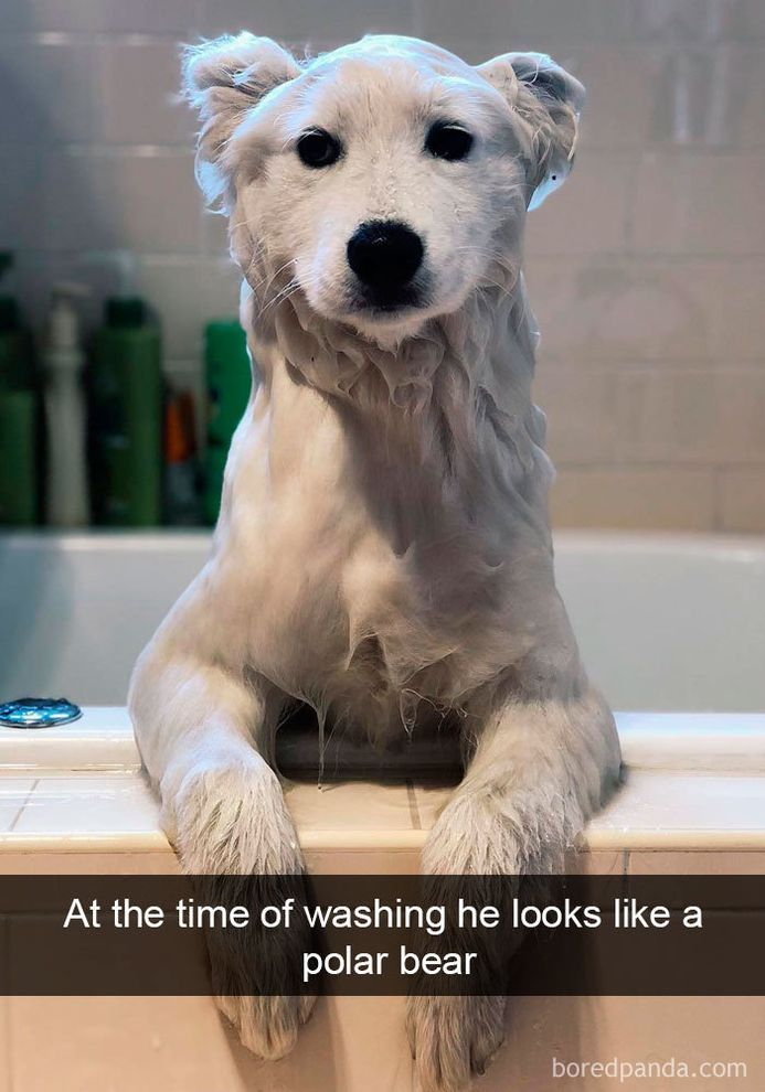 funny-dog-snapchats-that-you-need-to-see-right-now-16