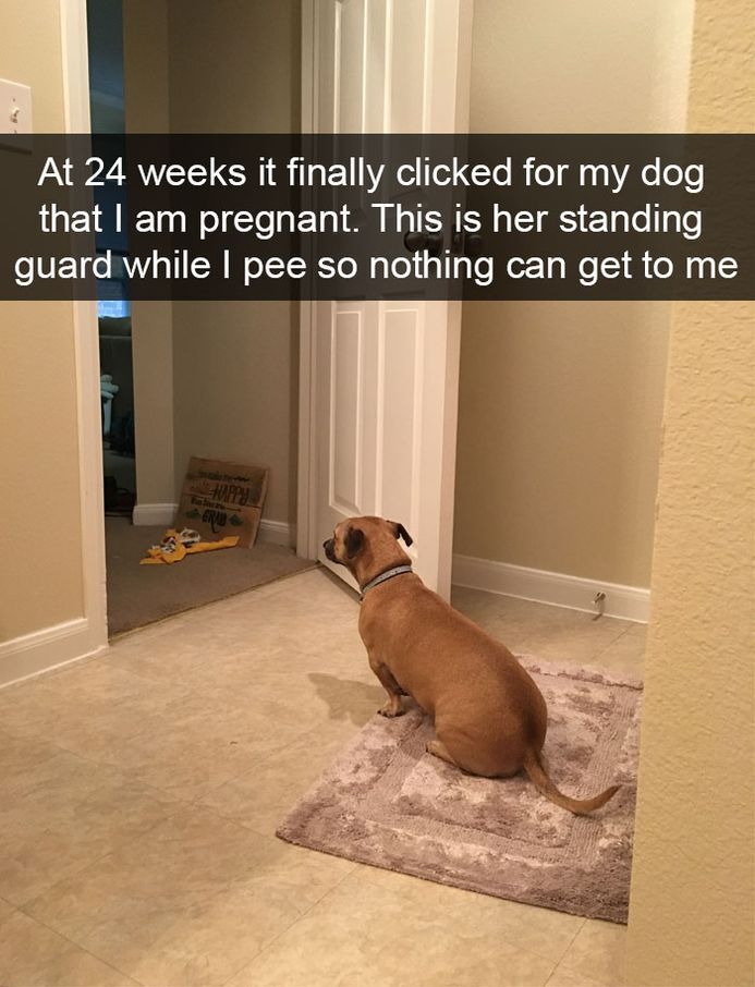 funny-dog-snapchats-that-you-need-to-see-right-now-17