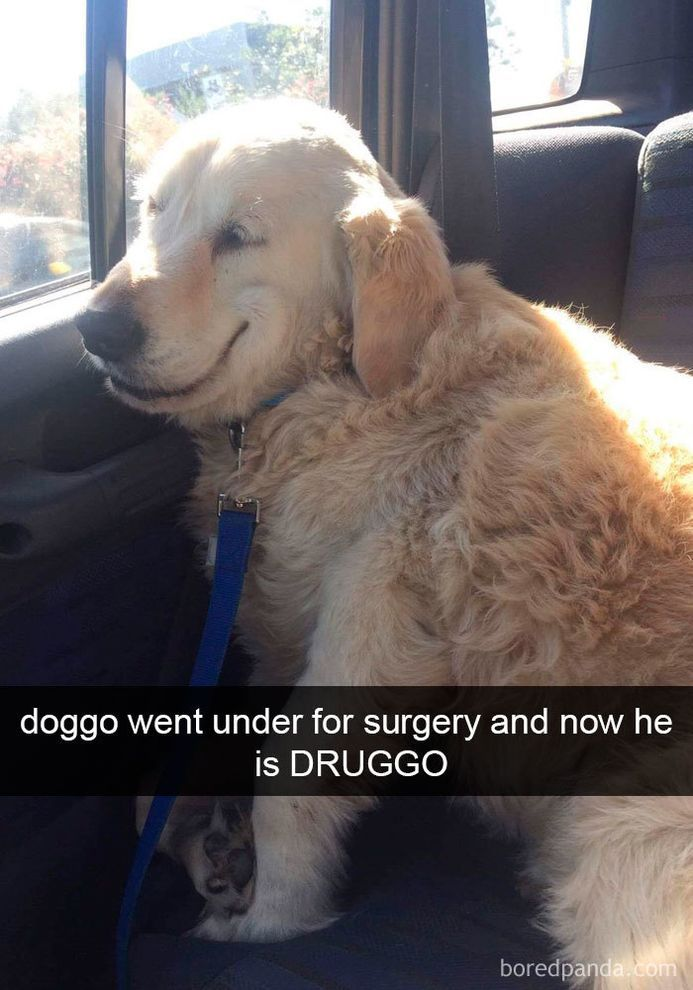 funny-dog-snapchats-that-you-need-to-see-right-now-19