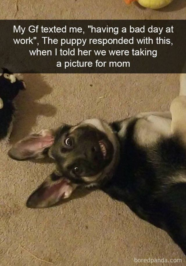 funny-dog-snapchats-that-you-need-to-see-right-now-20