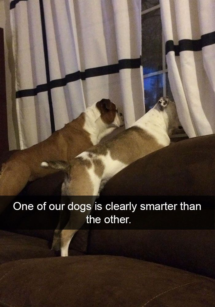 funny-dog-snapchats-that-you-need-to-see-right-now-21