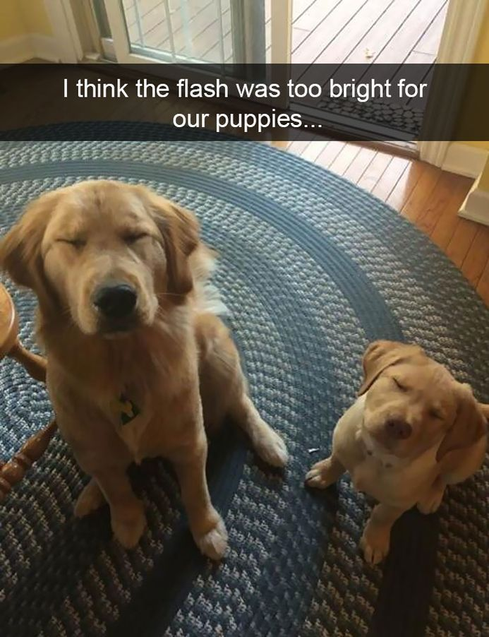 funny-dog-snapchats-that-you-need-to-see-right-now-24