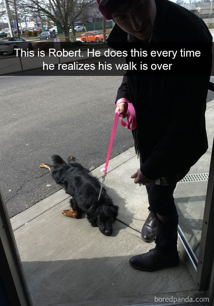 funny-dog-snapchats-that-you-need-to-see-right-now-30